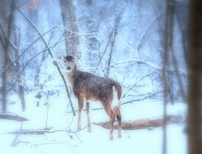 deer-1208198_960_720